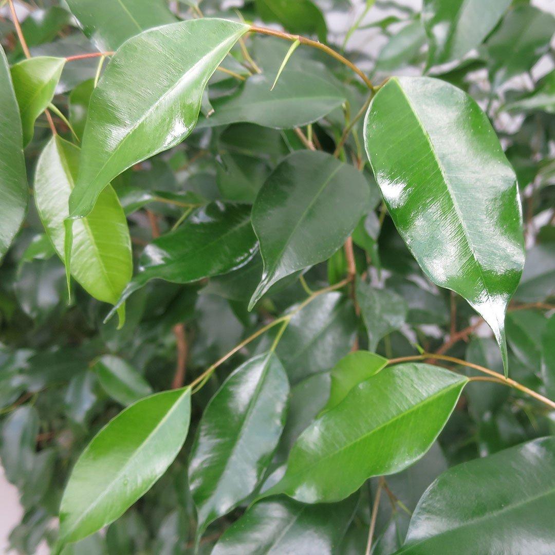 soluzione-arborea-separatore-ristorazione-rattiflora