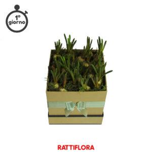 Florabox_Muscari_rattiflora_01A_02