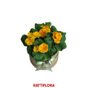 Florabox_Primula_rattiflora_01