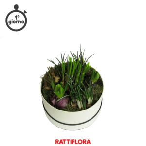 Florabox_Spring_mix1_rattiflora_01A_01