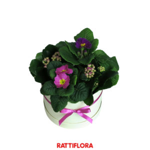 Florabox_Unclebox_rattiflora_01